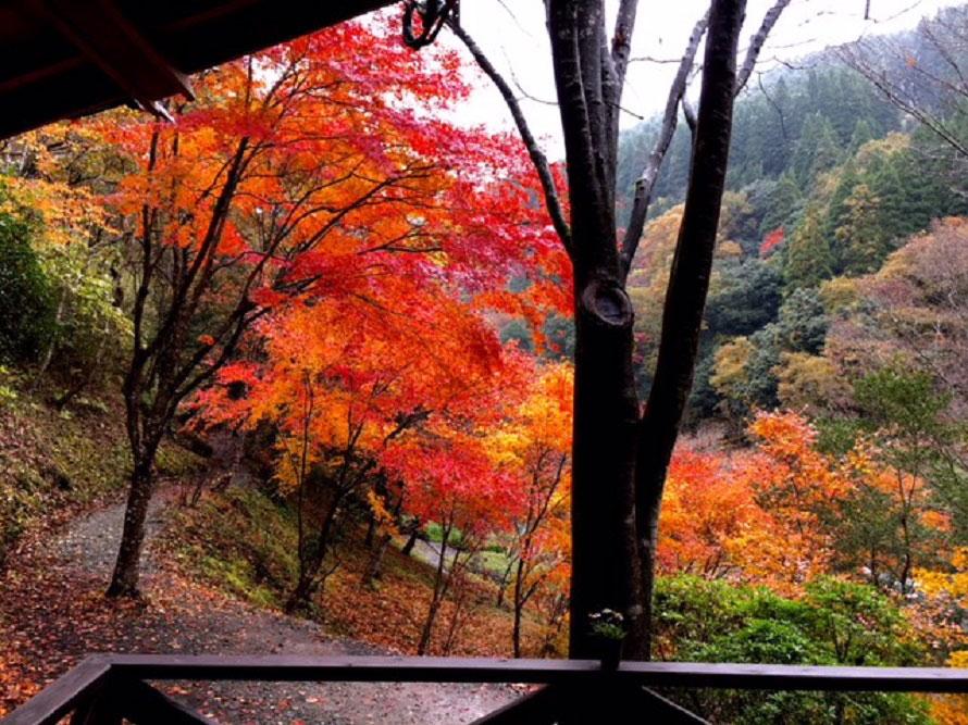 「喫茶ゆうすい」のテラス席からも、きれいな紅葉を眺めることができる。ぜひ、ひと休みしていこう。