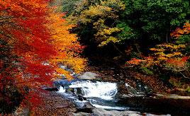 見事な紅葉が彩る滝と渓谷!ゆうすい自然の森へドライブ 熊本県小国町