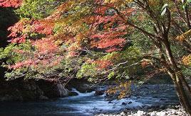 紅葉がきれいな久木ノ森山風景林と四万十ポークの豚まんがおいしい道の駅へドライブ 高知県四万十町
