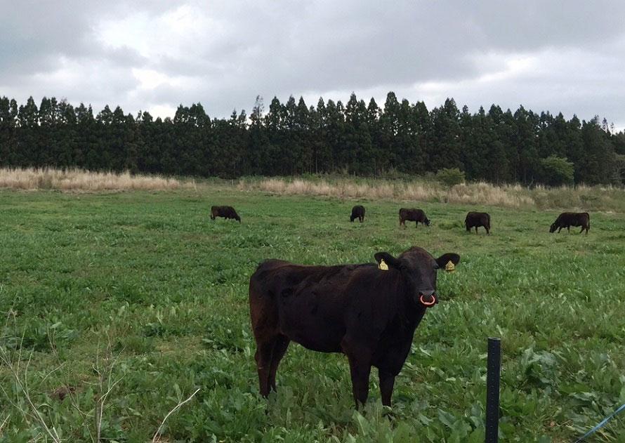 一帯にはのどかな田園風景が続く。