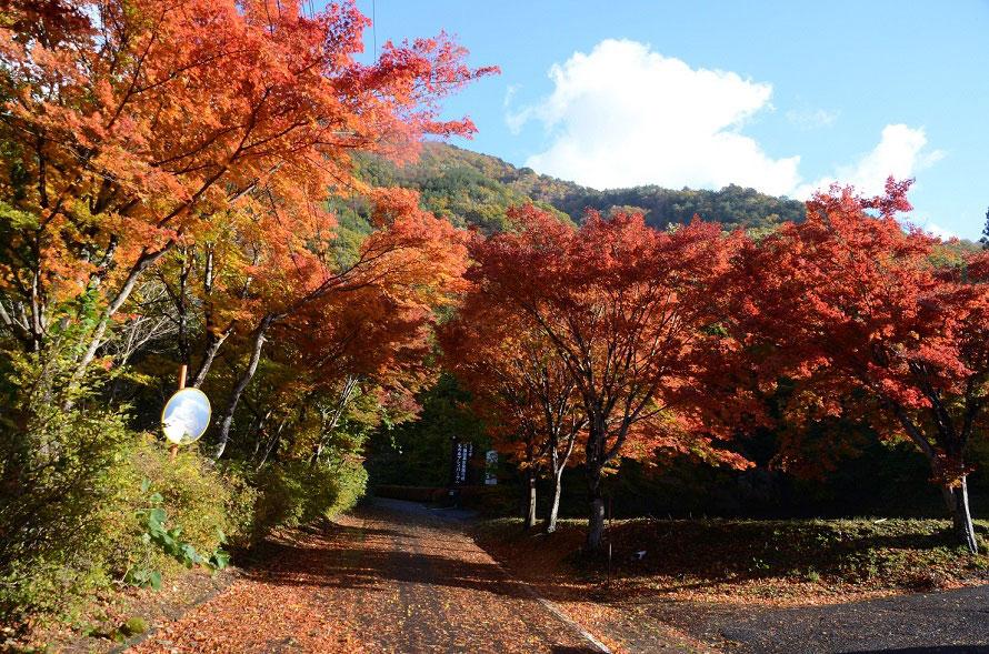 入口から見事な紅葉がお出迎え。園内2カ所にある駐車場は無料。園内には遊歩道やサイクリングロードが整備されている。
