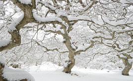 雪の積もるテングシデや露天の雪見風呂!冬景色に出会うドライブ 広島県北広島町