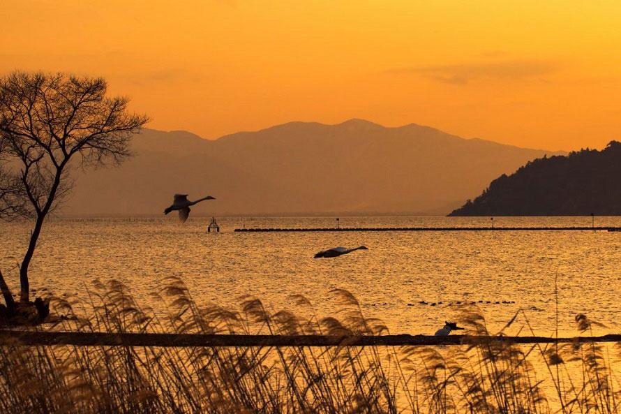 冬にかけて、オオヒシクイやコハクチョウ、オオワシなどの渡り鳥が飛来。琵琶湖の美しい夕日と野鳥の写真を撮りに訪れる人も多い。