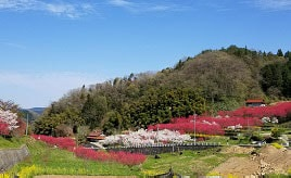「天国に一番近い里」は夢の桃源郷!ハナモモや菜の花が咲く里山へドライブ 島根県邑南町