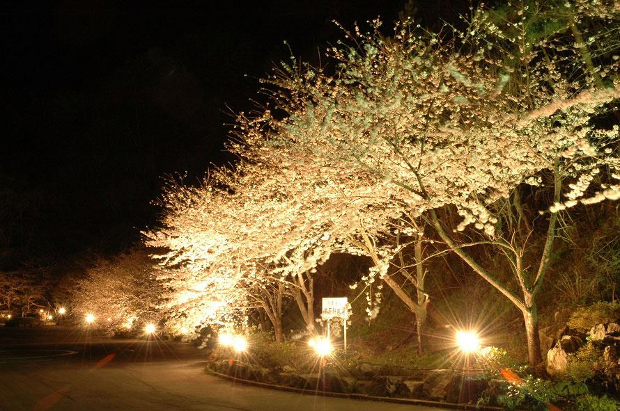 佐渡に春の訪れを告げるイベントで、毎年多くの人が訪れる。