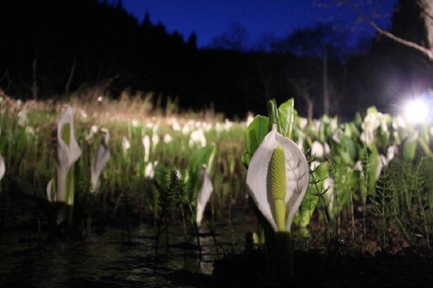 写真提供:尾瀬の郷 片品村