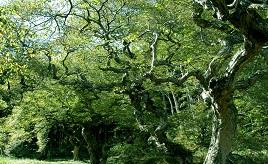 新緑の時期は必見!希少なテングシデの群生地へドライブ 広島県北広島町