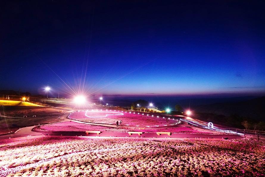 地面を覆う芝のように小さな花が咲く芝桜は、ライトアップされると日中とはまた違う雰囲気に。