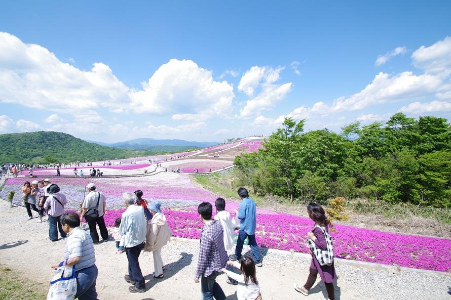 平成19年(2007)より芝桜の植栽が始まり、現在は色と形が異なる7種類の芝桜を楽しめる。
