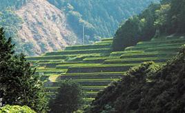 超絶品!びやびやかつおが食べられるイベントや新緑の棚田の絶景へドライブ 愛媛県愛南町