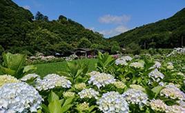 色とりどりのアジサイが満開に!絵画の中のような別天地、あわじ花山水へドライブ 兵庫県洲本市
