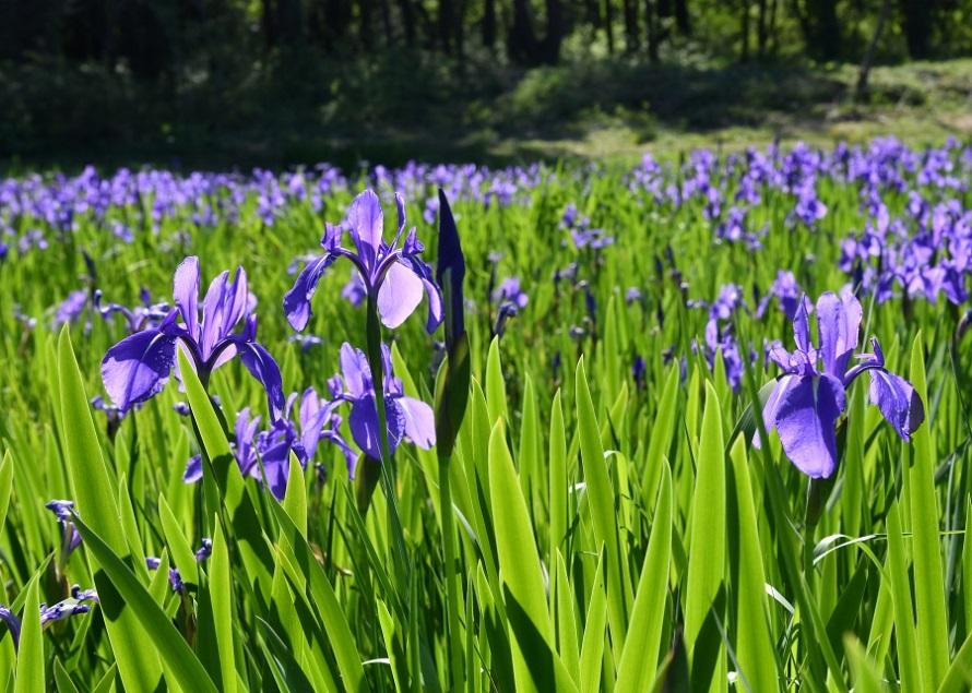 園内は自由に散策できる。6月2日(日)には生花や苗を販売するイベントが開催される予定。