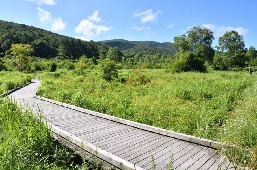 「八幡高原 カキツバタの里」から車で約5分の「霧ヶ谷湿原」は木道が整備され、散策するのにぴったり。霧ヶ谷湿原の名は、地元住民の公募で決まったという。
