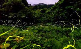 クチコミで評判に!無数のホタルが舞う美しい里山の原風景へドライブ 石川県珠洲市