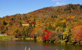 魅力的なイベントいっぱい!紅葉の茶臼山高原へドライブ 愛知県豊根村