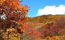 色鮮やかな紅葉の大パノラマ!大佐渡スカイラインをドライブ 新潟県佐渡市
