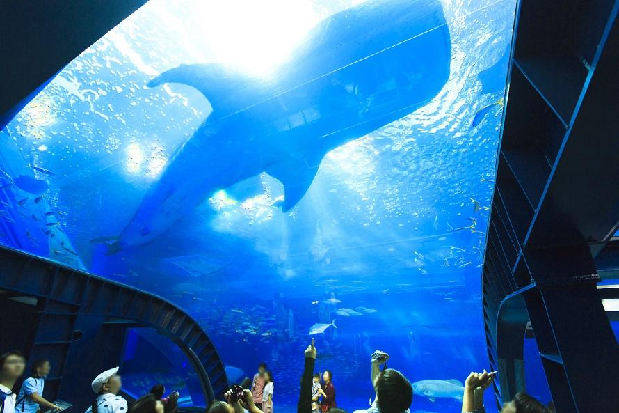写真提供 国営沖縄記念公園(海洋博公園):沖縄美ら海水族館「黒潮の海」から「深層の海」へ向かう順路の途中にあるアクアルーム。頭上を魚たちが泳ぎ、まるで海の中にいるかのよう。