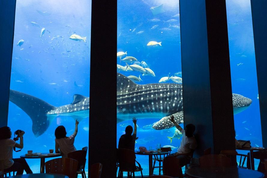 写真提供 国営沖縄記念公園(海洋博公園):沖縄美ら海水族館「黒潮の海」大水槽を眺めながらお茶や食事を楽しめるカフェ「オーシャンブルー」。