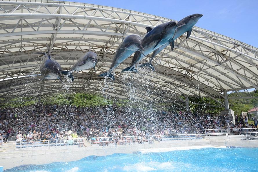 写真提供 国営沖縄記念公園(海洋博公園):オキちゃん劇場「オキちゃん劇場」ではイルカショーをはじめ、イルカの生態を学ぶことができる「ダイバーショー」を開催。