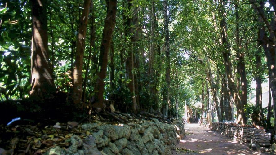 写真提供 (一社)本部町観光協会散策するのにちょうどよい1kmほどの並木道。先は備瀬崎まで続いている。