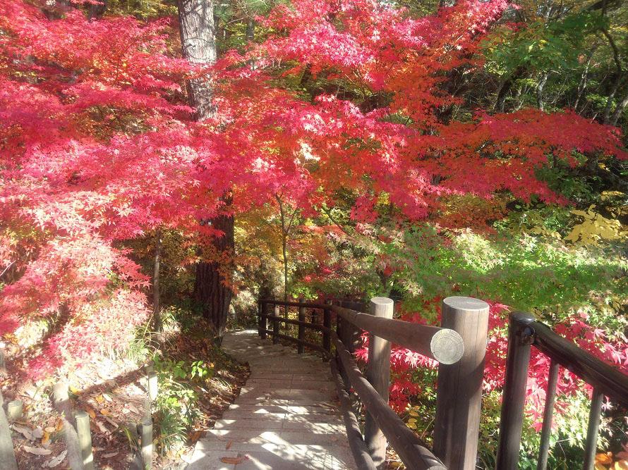 天龍峡を1時間ほどで1周できる遊歩道。見事な紅葉を楽しめる。