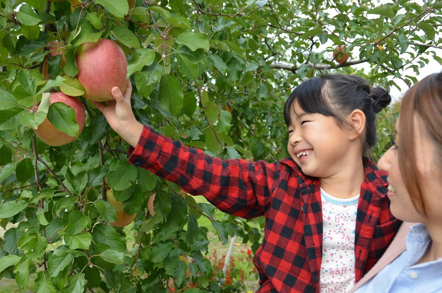 採ったリンゴを買って持ち帰れる農園もある。