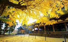 黄金色に輝くイチョウの大木は圧巻!新宮熊野神社へドライブ 福島県喜多方市
