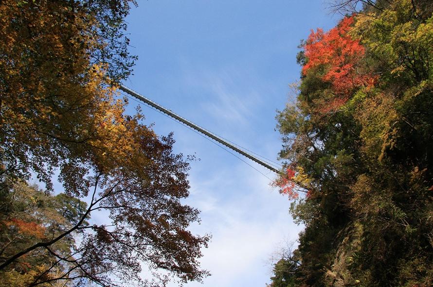 大吊橋の下に広がる「九酔渓」から見上げると、あまりの高さにめまいがしそう。