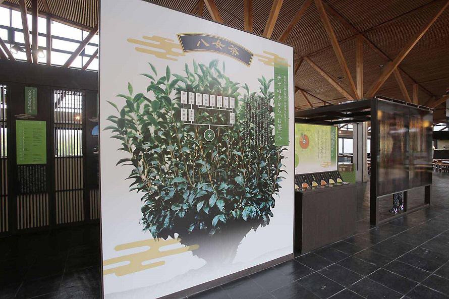 展示ホールでは、お茶の生育状況や製法、お茶の種類などをわかりやすく展示。