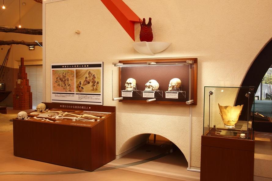縄文人大解剖コーナーでは、縄文人の骨格を展示。