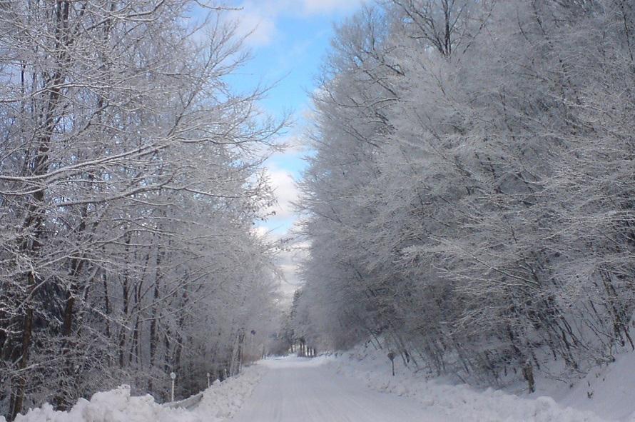 霧氷(樹氷の一種)は1~2月に見られることが多い。