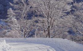 霧氷がキラキラ!絶景続きのワインディングロード・高野龍神スカイラインをドライブ 和歌山県有田川町