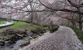 桜も見頃!濃厚ソフトクリームがおいしい牧場や素敵な隠れ家カフェへドライブ 香川県塩江町