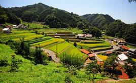 農業が育む田園風景!のどかな棚田や杉並木の参道へドライブ 島根県邑南町