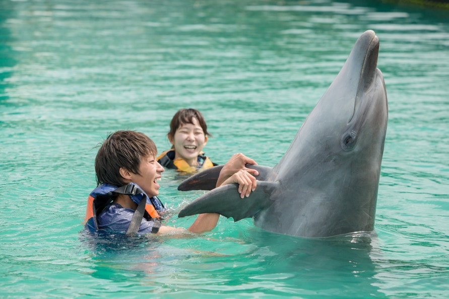 イルカに触れたり、一緒に泳いだり。イチ押しのドルフィンプログラムを体験しよう。