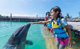 イルカと遊べるドルフィンプログラムを体験しよう!マリンレジャーを満喫ドライブ 沖縄県本部町