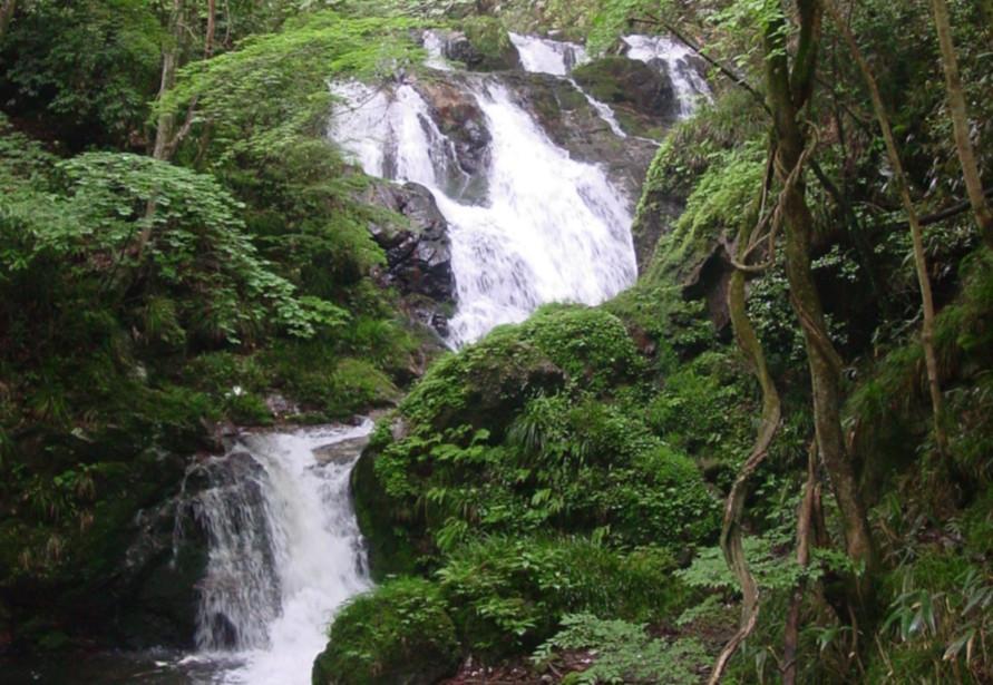 静謐な空気の中、マイナスイオンをたくさん浴びて森林浴。