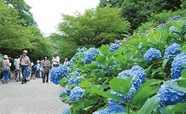 六甲山の自然を体感するおすすめドライブルート