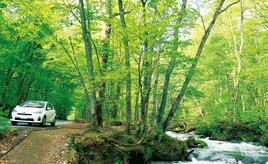 奥入瀬渓流と十和田湖に遊ぶ清冽な水辺のドライブルート