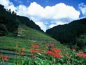 福岡県 観光におすすめのドライブルート
