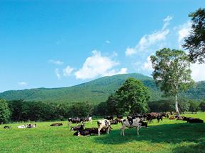 斑尾高原・黒姫高原の爽快ドライブ 長野県の観光におすすめのドライブルート