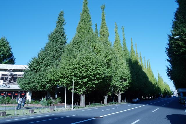 東京都内、ドライブデートにおすすめのルート