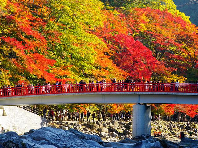 トヨタ自動車の工場見学と香嵐渓を巡る 紅葉におすすめのドライブルート