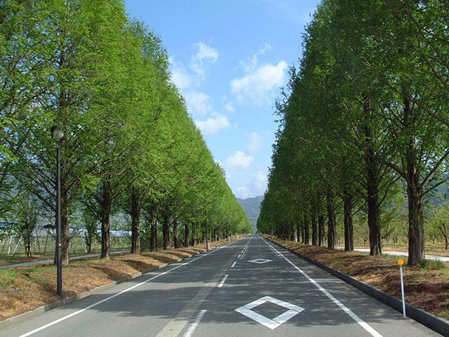 メタセコイア並木と琵琶湖岸の風車街道を走る滋賀おすすめ ...