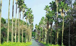 熱海・伊豆を堪能する観光におすすめのドライブルート