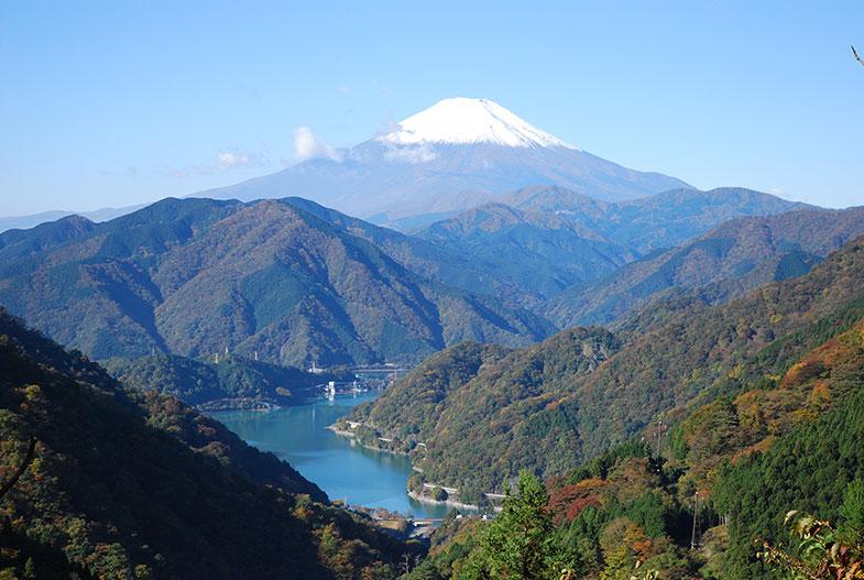 神奈川・山北町で足柄茶を味わう体験ドライブルート