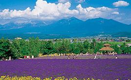 国道237号、花人街道で季節の花々を楽しむ 北海道・富良野ドライブルート