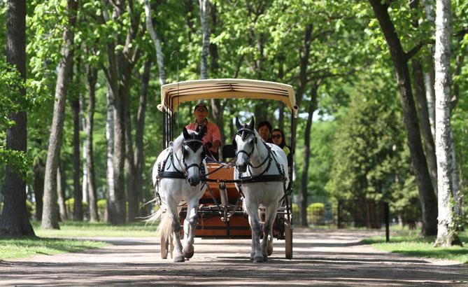 日高&苫小牧は競走馬の故郷! 名馬にふれるドライブルート