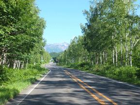 絶景ドライブルート 森を再生させた白樺林が美しい美瑛の道 北海道美瑛町