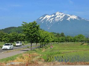 絶景ドライブルート 世界一長い桜並木がある、岩木山麓の高原道路 青森県弘前市